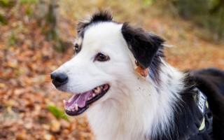 Разновидности кардиомиопатии у собак и способы ее лечения