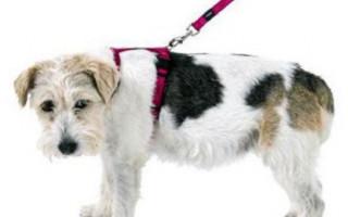 Какой поводок лучше для собаки: мнение эксперта