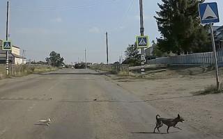 Как собака котят от горе-матери спасала