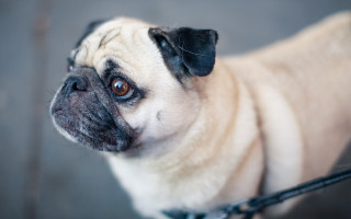 Собака не хочет на прогулку: причины и пути решения проблемы
