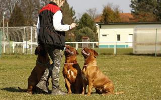 Повышение квалификации по-собачьи