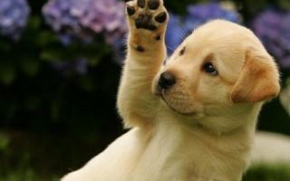 Чем лечить лишай у собак: традиционные и нетрадиционные методы