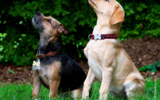 Как научить щенка и собаку команде Лежать