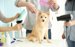 Как подстричь собаку: способы, инструменты и советы специалистов