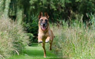 Активный исследователь или ленивый домосед: всё о темпераментах собак