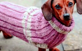 Осенняя одежда для собак своими руками: фото