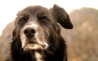 Недержание мочи у собаки: причины, лечение, профилактика