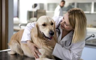 Забота о питомце; как ухаживать за собакой: инструкция для начинающих