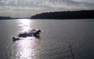 Голодный крокодильчик прямо на улице хотел съесть собаку: видео
