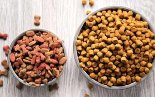 Как выбрать корм для собаки. Советы неопытному заводчику