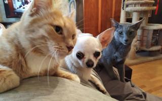 Как подружить кошку с собакой в квартире — подборка полезных советов