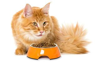 Камни в почках у кошек; мочекаменная болезнь