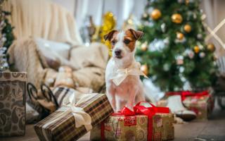 Почему нельзя дарить собаку: 5 причин и последствия