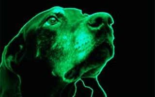 7 Причин Сердечной Недостаточности у Собак (Причины, Механизм развития, Классификация стадий, Диагностика и Лечение)