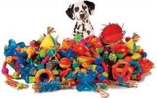 Игры, которые стоит предпочесть для воспитания собаки