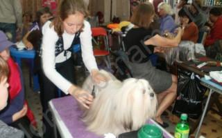 Подготовка собаки к первой выставке