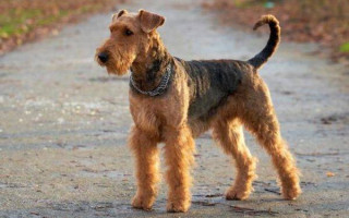 Какая порода собаки вфильме«Приключения Электроника»