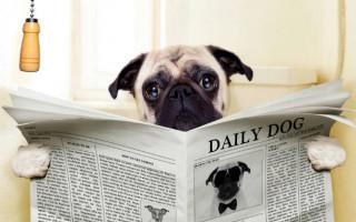 У собаки понос: что делать?