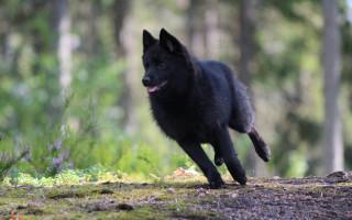В дорогу с собакой: лучшие породы для путешествий