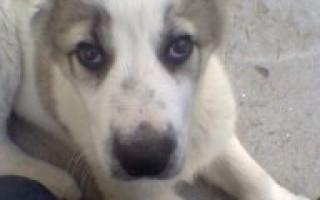 Вольеры для собак (фото): домик для питомца своими руками