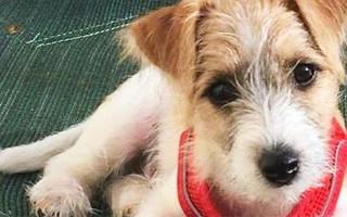 Борис, ты неправ: британский премьер привёз в резиденцию собаку