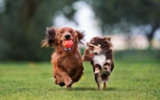 Двойные клички для собак, русские и иностранные