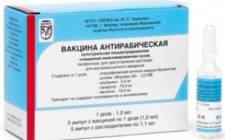 Вакцинация от бешенства у человека после укуса
