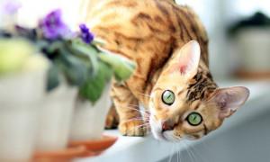 Поведение кошки после стерилизации: чего ждать от питомицы