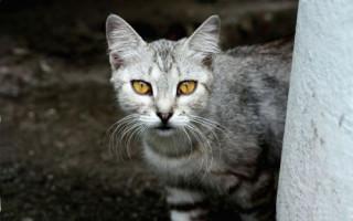 Взгляд в глаза кошке: почему нельзя и чем грозит