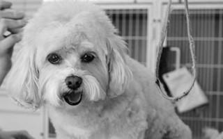 Как стричь собак в домашних условиях, каким породам это необходимо