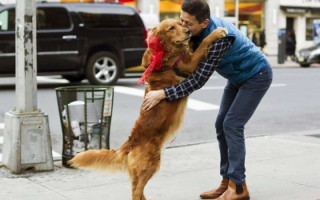 3 причины запрещать собаке ставить лапы на хозяина