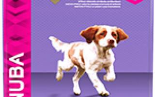 Ингредиенты, цена, класс: как выбрать корм для собаки