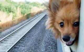 Правила перевозки собаки в поезде