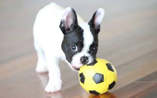 Как играть с собакой: лучшие идеи