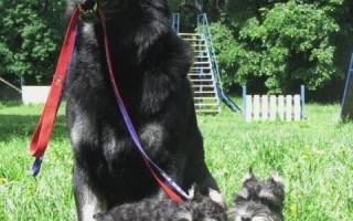 Dog-урок: дрессировка собаки, первые шаги