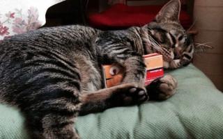 Заболевания дыхательной системы у кошек