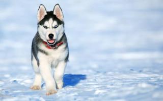 Топ-10 вещей, которые ненавидят собаки