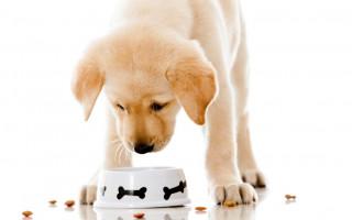 Питание щенка: составление рациона, меню на день, особенности и важные нюансы
