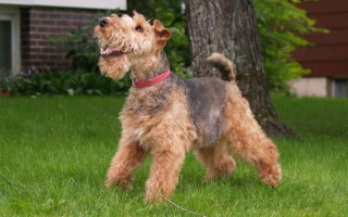 Симптомы тахикардии у собак и методы лечения