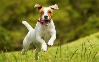 Породы собак (фото с названиями): выбираем друга по душе