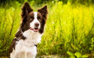 Недорогие собаки средних размеров: описание и фото