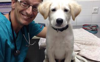 Как выбрать ветеринара или хорошую ветеринарную клинику для собаки