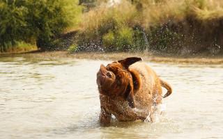 Как правильно купать собаку в домашних условиях