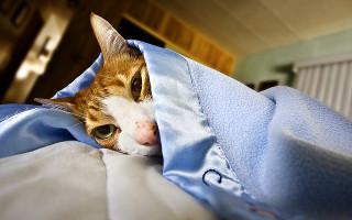 Язва желудка у кошек и котов