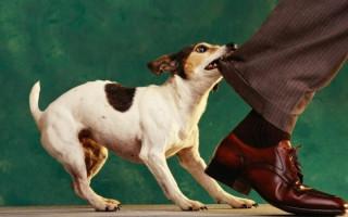 Как отучить собаку бросаться на машины