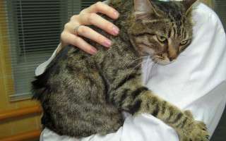 Инфекционные респираторные болезни кошек