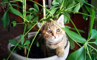 4 способа отучить кота лезть в цветы