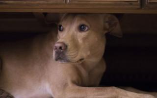 Почему собака прячется в темное место: подробный разбор проблемы
