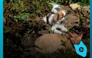 Почему кошки умываются, а собаки нет