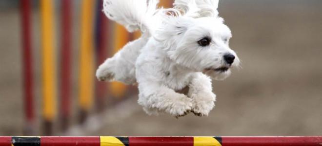 Водная беговая дорожка для собак в Екатеринбурге